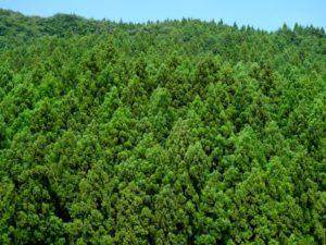 たくさんの木々
