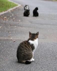 遠くの猫を見る猫